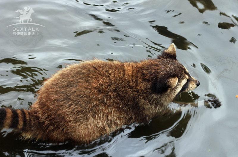 花蓮新光兆豐農小浣熊