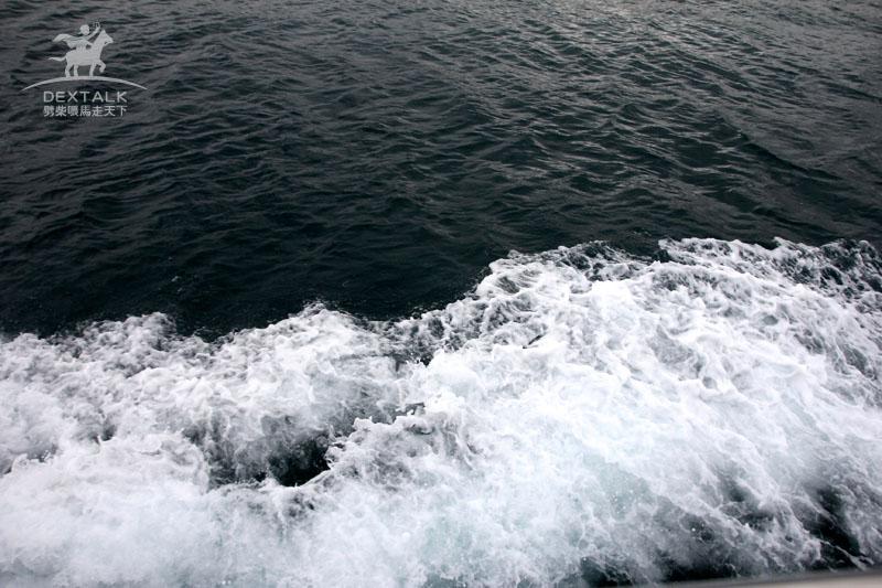 花蓮多羅滿賞鯨大浪
