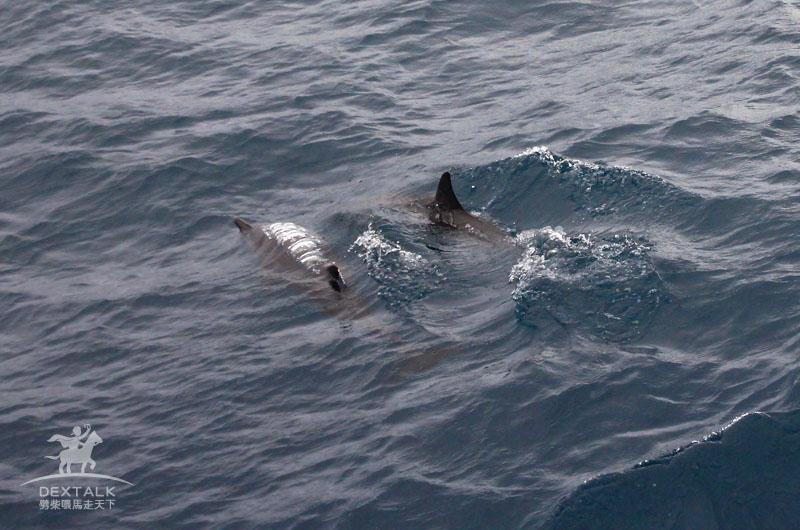 花蓮多羅滿出海賞鯨