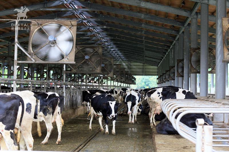 花蓮瑞穗牧場牛棚