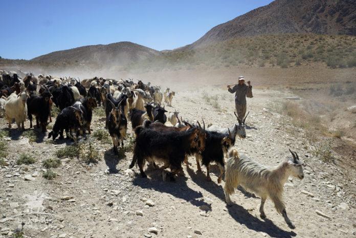 伊朗 Nomad 遊牧民族隱居 Zagros 荒山體驗